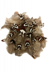 Ringneck Pheasant Plumage Gold Sides 20g PACK
