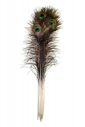 Peacock Feather 75-90cm, PACK of 100