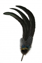 Hat Flower Coque Tails Guinea Fowl