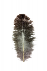 Ostrich Feather Byock 12-16