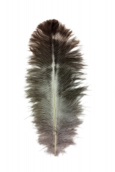 Ostrich Feather Byock 16-20