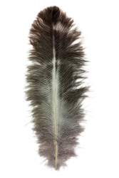 Ostrich Feather Byock 20-24