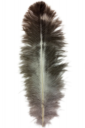 Ostrich Feather Byock 24-28