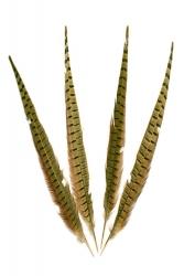 Wildfasanfedern 2.Wahl, 40-50cm