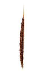 Goldfasanfedern 1. Wahl, 60-70cm