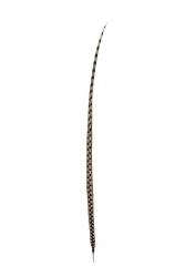 Königsfasanfedern 1. Wahl, 110-120cm