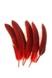 Guinea Fowl Wings red, 5g PACK