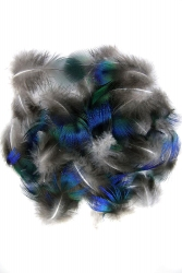 Pfauenrupf blau-schillernd 2g PACK